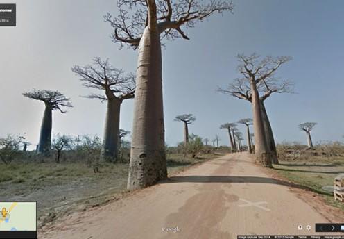 baobab_streetview_small